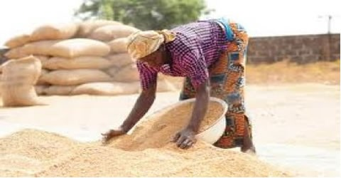 Rice Farmers call for more support to boost production