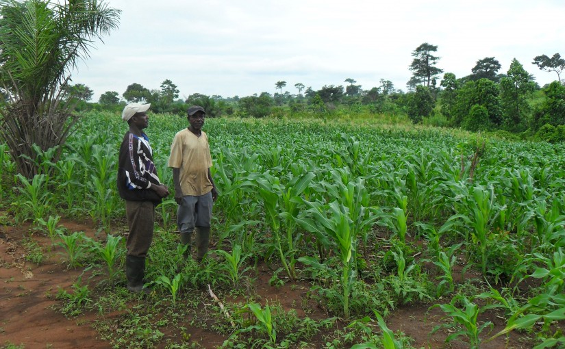Dumsor causing irrigation issues for farmers